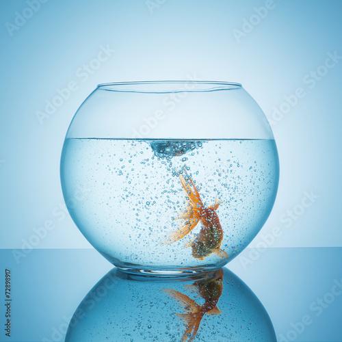 Goldfischglas mit wirbel und fisch - 72898917