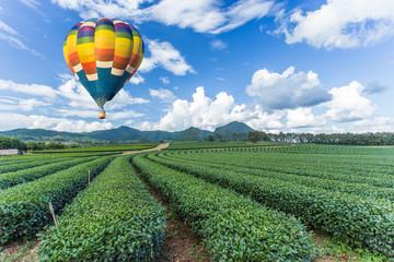 Hot air balloon over tea plantation