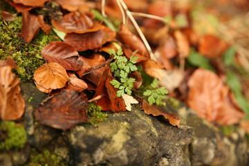 Frühlings vrs. Herbst