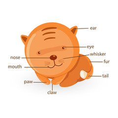 cat vocabulary part of body vector