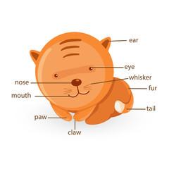 cat vocabulary part of body vector