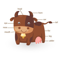 cow vocabulary part of body vector