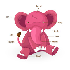 elephant vocabulary part of body vector