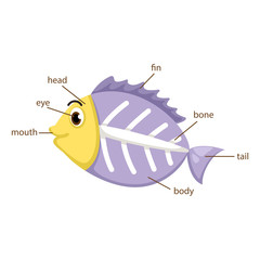 x-ray fish vocabulary part of body vector