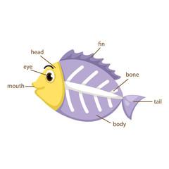 x-ray fish vocabulary part of body vector