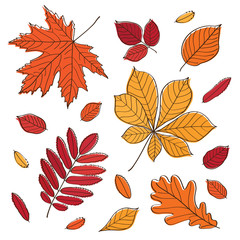 Fall of the leaves. Autumn leaves. Vector illustration.