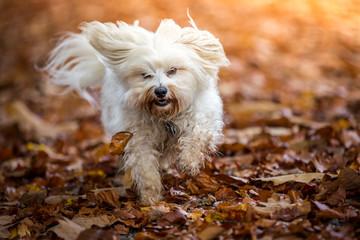 Hund im Herbst Laub