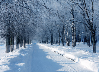 Winter nature, alley in park