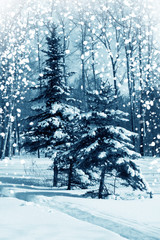 Winter nature, forest in snow