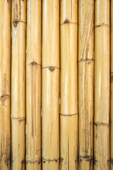 Yellow bamboo texture and background