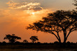 African sunset with tree in front - 72908171