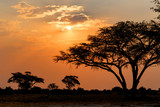 Fototapety African sunset with tree in front