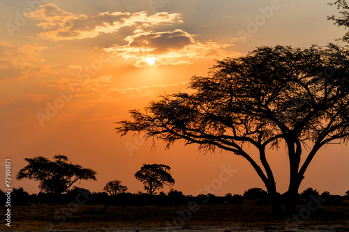 Fotobehang Zonsondergang African sunset with tree in front