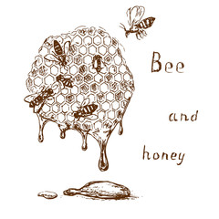 Bee and honey 2