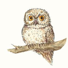 Owl illustation 3