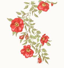 Dog rose 2