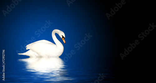 Papiers peints Cygne Mute swan