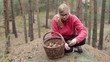 Young woman picking and cleaning wild mushrooms in the forest.