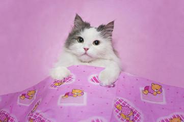 Kitten sleeping in a pink little bed