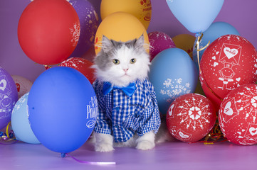 cat in a blue shirt on a background of colorful balloons
