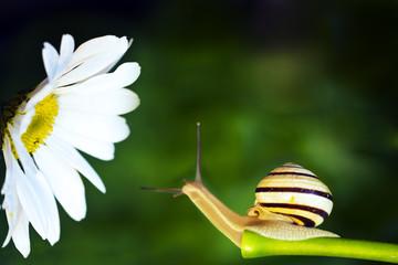 Snail and daisy grass