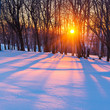 canvas print picture - Sunset in winter forest