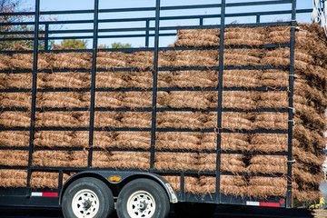 Trailer of Pinestraw Bales