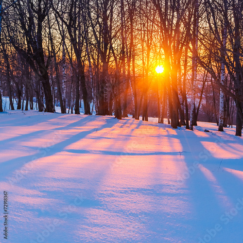 canvas print picture Sunset in winter forest
