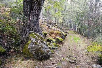 Senda de los Horcajuelos en el Valle de Iruelas