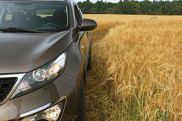 car in a wheat field summer SUV