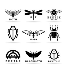 Insects (1)