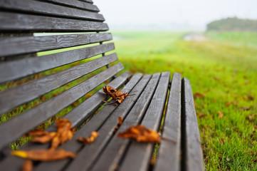 Parkbank mit Laub im Herbst