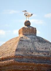 Seagull on the gatehouse of the castle in Cadiz, Spain