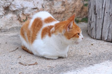 Street cat in Crete, Greece