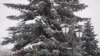 Winter garden. Christmas Tree.