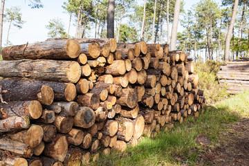 tas de troncs de pins dans les landes