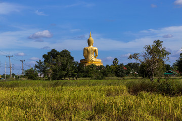 big golden buddha statue sitting with foreground on rice field