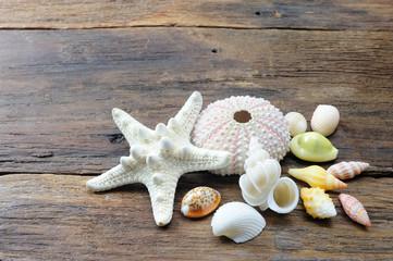 ヒトデと貝殻