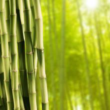 Bambou fraîches en bambou fond de forêt