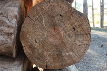 The cut pine