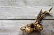 roe skull backgrounds 2