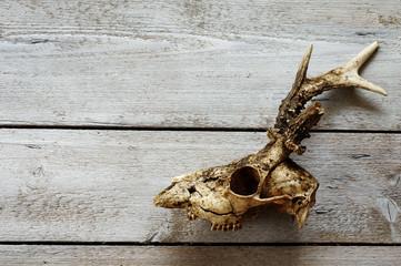 roe skull backgrounds