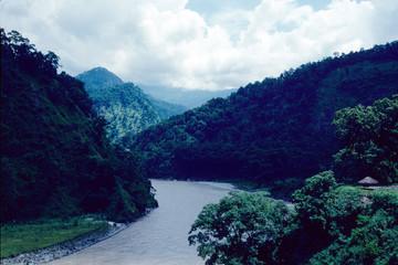 sikkim india foresta giungla himalaya
