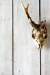 roe skull backgrounds 3