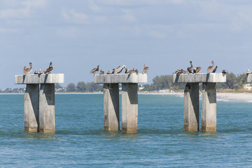 pelican sitting on concrete columns