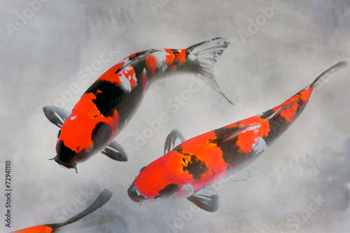 Fototapeta Calico Koi Fish Watercolor Illustration