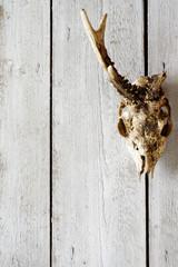 roe skull backgrounds 4