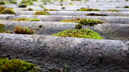 Moos auf Eternitdach