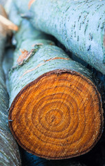 rings of chopped tree trunks