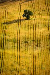 Albero e terra dorata